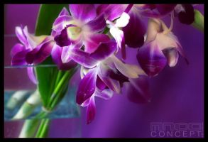 Breathing Colour by mnoo