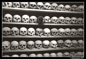 Cabinet of skulls by Hiddenplanet