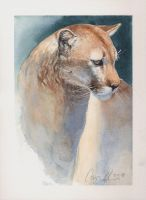Mountain Lion Watercolor 2018 by ablaise
