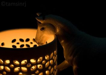Interesting candle by tamsinrj