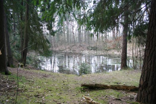 Forrest and Lake Stock 04 by vampyriastock