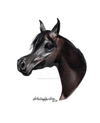 Black Beauty Arabian Horse by HorsEquinoS