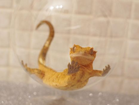 Gecko - Glass Bubble II by MegansFigureCase