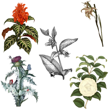 Variety of 1800's Flowers 2 PNG by chaseandlinda
