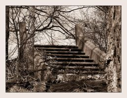 Forest Staircase by syrenemyst