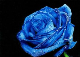 Blue Rose by martakazik