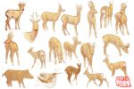 Deer studies by kalambo