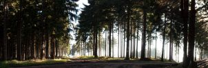 Large Forest Panorama by Kaldrax