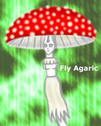 fly agaric by 0202742