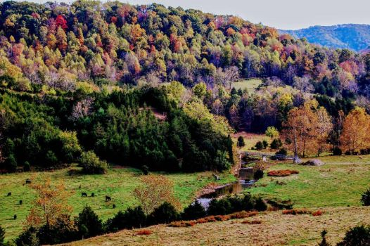 autumn in Catawba by M1MD