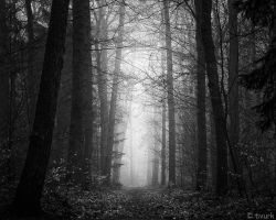 Path to Oblivion by tvurk