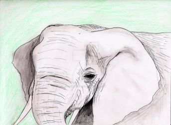 Olifant by charityhendrix