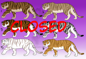 Tiger Adopts 3 CLOSED by Marquez0725