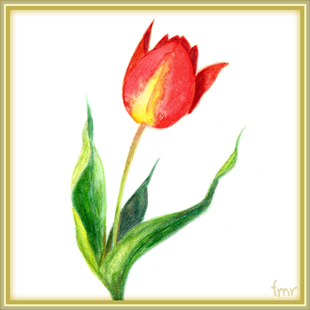 Red Tulip by fmr0