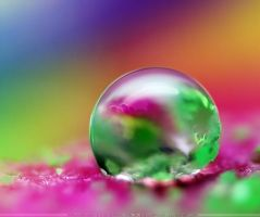 Colorful Close up by SheilaMBrinson