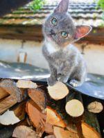 Neighbor's KITTEN by Nikoleta036