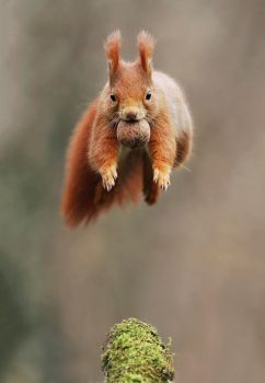 Leaping Squirrel by JulianRad