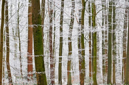 white branches by augenweide