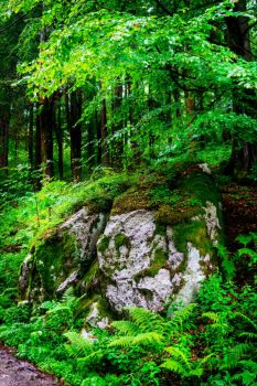 Mossy Rock II by Aenea-Jones