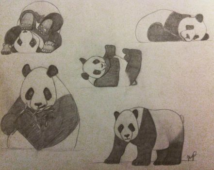 Panda Collection Pencil Drawing by InsanieJanie808
