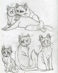 Warrior Cats Set 18 by KasaraWolf