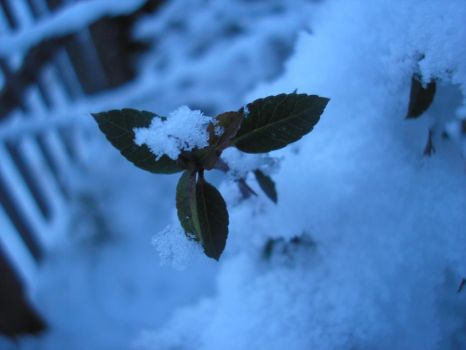 Snowy leaves by StivStock