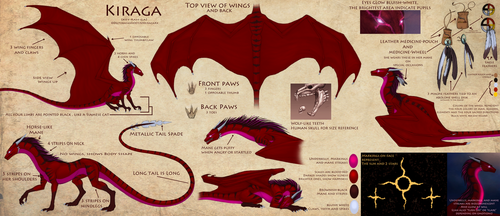 Kiraga Reference (Updated info) by Enigmatic-Ki