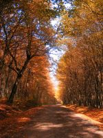 autumn 4 by compot-stock