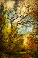 path in the woods by fodorpetya