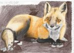 Red fox in the dirt by SlackerInDenile