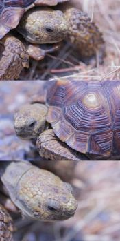 the store of a turtle... by blackharlequin