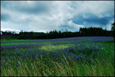 BG Fields Of Blue by Eirian-stock