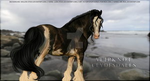 Slipknot Clydesdale by Horses-Are-Real