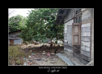 Malaysia.8: Chicken Tree by Angelfae