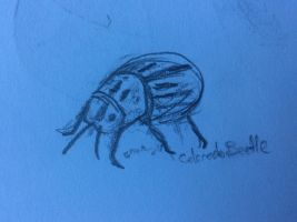 Colorado Beetle Sketch by TheOtherBillionaire