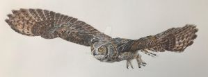 Great horned owl  by DaveSalter
