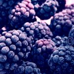blackberry by illusionality