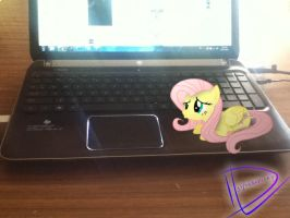 Request: Fluttershy on a Laptop by UtterlyLudicrous