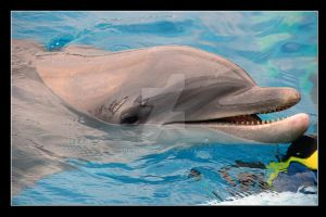 Dolphin by scuroluce