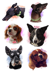 Pet Portraits by BooYeh