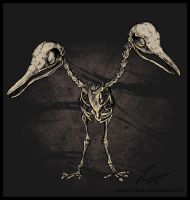 Doduo skeleton
