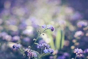 Forget me not by Whimsical-Dreams