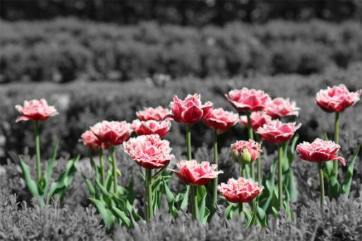 Flowers. by Penni2