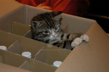 Ninja in a wine box by dannykaye