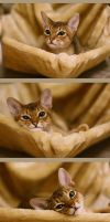 Amazing cat faces by Girhasha