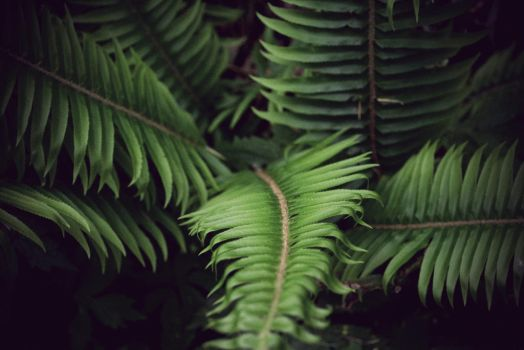 Among The Ferns by signalfade
