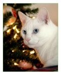 wiating for Santa by akkict-p by CTPhotographers
