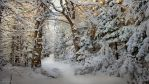 Snowy Forest Path by Pajunen