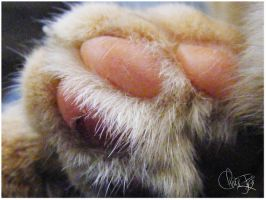 Paw Prints by AkF-Photography