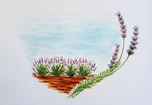 Lavandula flowers by DevilishEvelyn